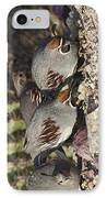 Gambel's Quail IPhone Case by Gregory Scott