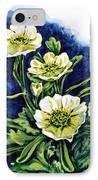 Alpine Ranunculus IPhone Case by Zaira Dzhaubaeva