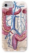 Anatomy Of Human Abdominal Vein System IPhone Case