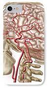Anatomy Of Human Skull, Eyeball IPhone Case by Stocktrek Images