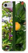 Apples And Apricots IPhone Case by Will Borden