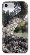 Arboretum Tree IPhone Case by Daniel Hagerman