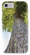 Bald Cypress In Morning Light IPhone Case