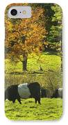 Belted Galloway Cows Grazing On Grass In Rockport Farm Fall Maine Photograph IPhone Case by Keith Webber Jr