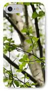 Birch Tree In Spring IPhone Case by Elena Elisseeva