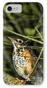 Bird - Baby Robin IPhone Case by Paul Ward