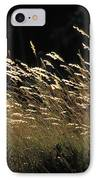 Blades Of Grass In The Sunlight IPhone Case by Jim Holmes
