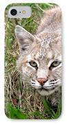 Bobcat Stalking IPhone Case by Sylvie Bouchard