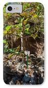 Breadfruit Tree IPhone Case by Omaste Witkowski