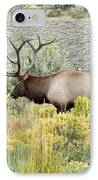 Bull Elk In Rut IPhone Case