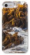 Bull Kelp Durvillaea Antarctica Blades In Surf IPhone Case