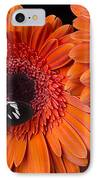 Butterfly On Orange Mums IPhone Case by Garry Gay