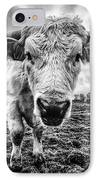 Cadzow White Cow Female IPhone Case by John Farnan