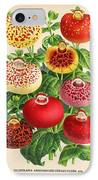 Calceolaria From A Vintage Belgian Book Of Flora. IPhone Case