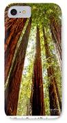 California Coastal Redwoods IPhone Case