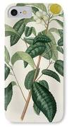 Camellia Thea IPhone Case by LFJ Hoquart