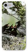 Common Raven Feeding Young In Nest IPhone Case by William H. Mullins