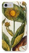Elecampane IPhone Case by Elizabeth Blackwell