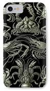 Examples Of Decapoda Kunstformen Der Natur IPhone Case by Ernst Haeckel