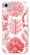 Examples Of Florideae From Kunstformen Der Natur IPhone Case by Ernst Haeckel
