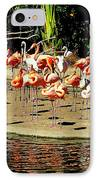 Flamingo Family Reunion IPhone Case by Karen Wiles