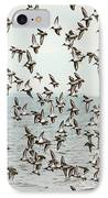 Flock Of Dunlin IPhone Case by Karol Livote