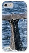 Flukes Of A Sperm Whale 2 IPhone Case by Heiko Koehrer-Wagner