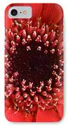 Gerbera Daisy Flower IIi IPhone Case by Natalie Kinnear