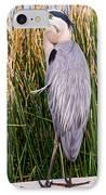 Great Blue Heron IPhone Case by Edward Fielding