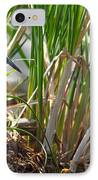 Green Heron Fishing IPhone Case by Kathleen Bishop