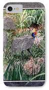 Guinea Fowl In Guinea Grass IPhone Case
