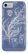 Hyalosiphonia Caespitosa Okamura IPhone Case by Aged Pixel
