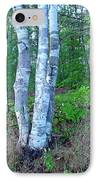 Lone Birch In The Maine Woods IPhone Case