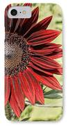 Lone Red Sunflower IPhone Case by Kerri Mortenson