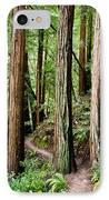 Muir Woods IPhone Case by Niels Nielsen