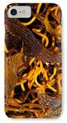 Noodles Of The Sea IPhone Case by Gwyn Newcombe