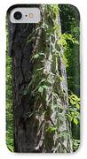Old Growth  Loblolly Pine - Congaree Swamp IPhone Case by Suzanne Gaff