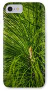Pine Needles IPhone Case by Marvin Spates