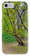Poudre Trees-2 IPhone Case by Baywest Imaging