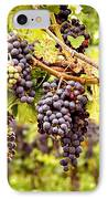 Red Grapes In Vineyard IPhone Case by Elena Elisseeva