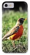 Robin IPhone Case by Elena Elisseeva