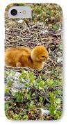 Sandhill Crane Chick IPhone Case