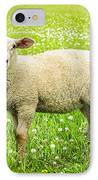 Sheep In Summer Meadow IPhone Case by Elena Elisseeva