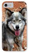 Siberian Husky With Blue And Brown Eyes IPhone Case