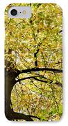 Sunlit Autumn Tree IPhone Case by Natalie Kinnear