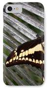 Swallowtail Butterfly IPhone Case by Olivier Le Queinec