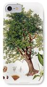 Sweet Chestnut IPhone Case by Johann Kautsky