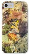 Tidal Pool Color IPhone Case by Debbie Green