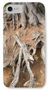 Tree Root IPhone Case by Matthias Hauser
