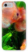 Tropical Discus Fish Group IPhone Case by Amy Vangsgard